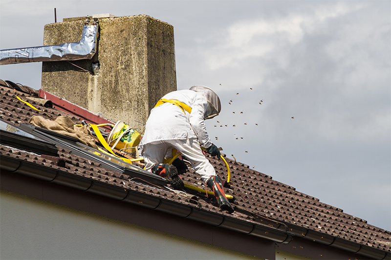 Bee Pest Control in Waltham Forest Greater London